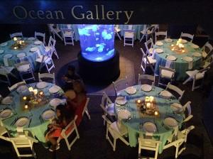 ocean-gallery2